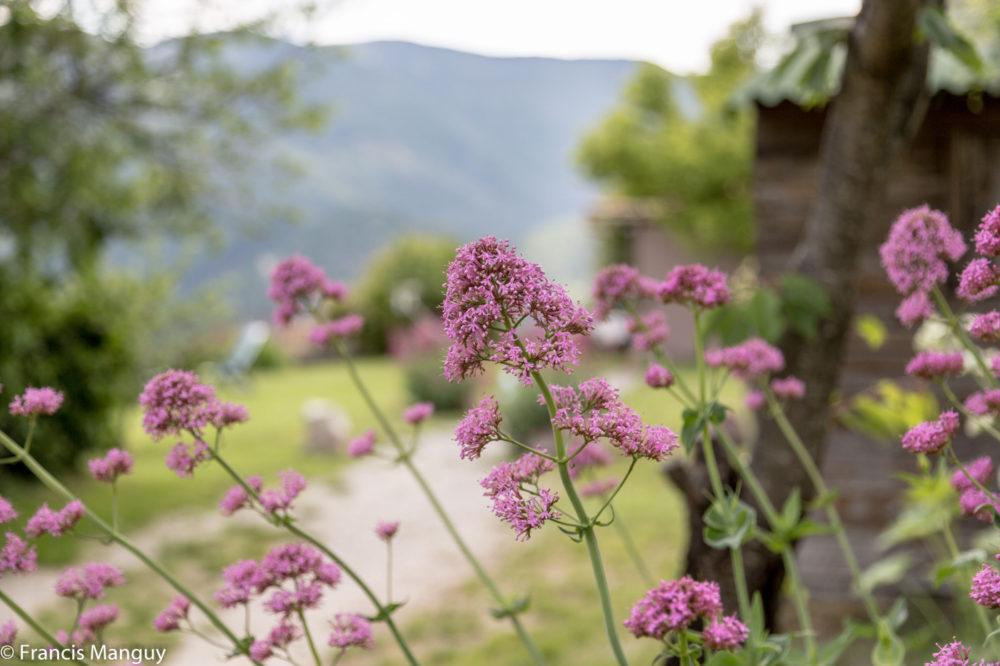 Le Bellevue- Montbrun-les-Bains - Le Jardin